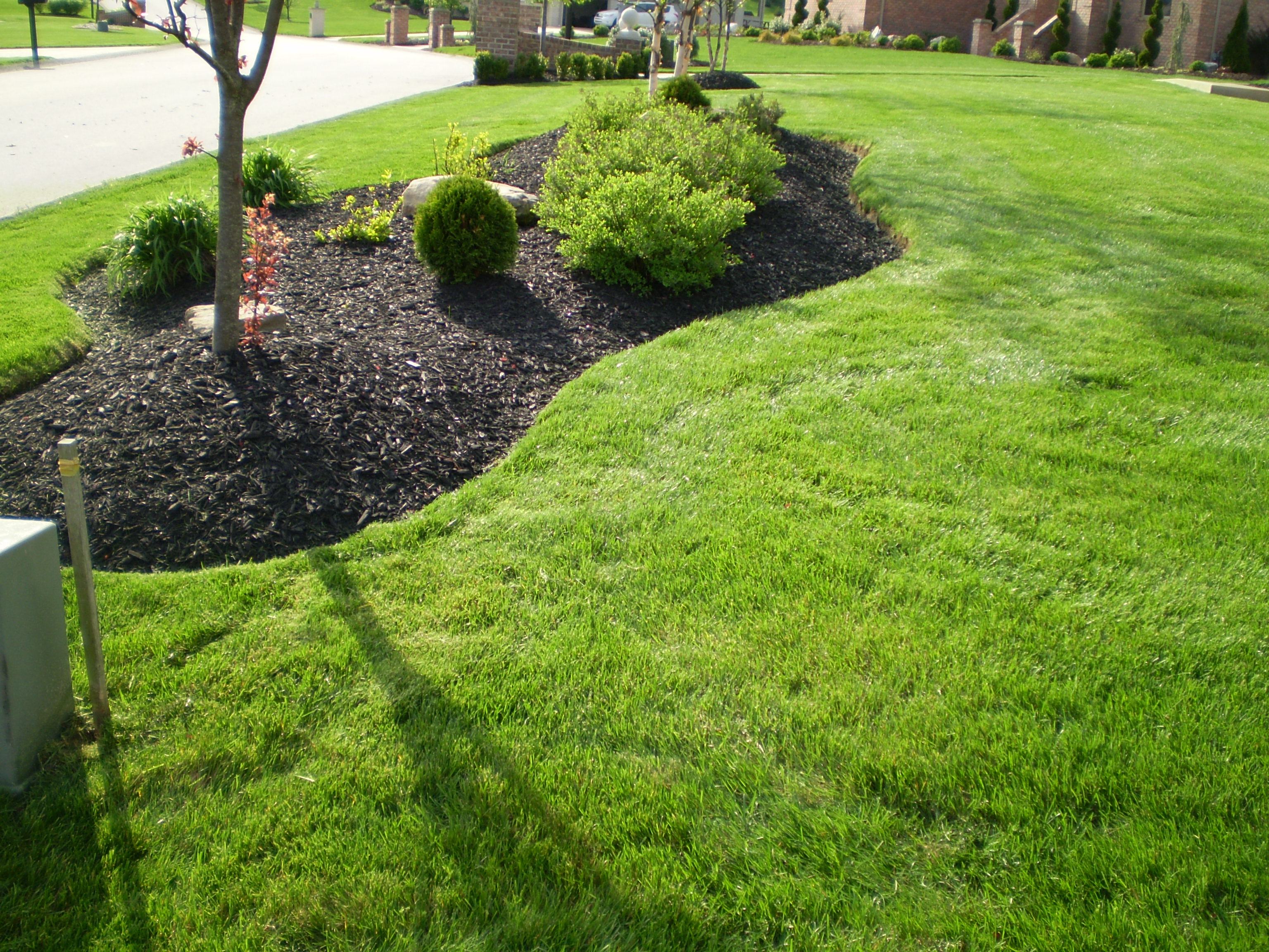 Nunez professional landscaping for Professional landscaping service